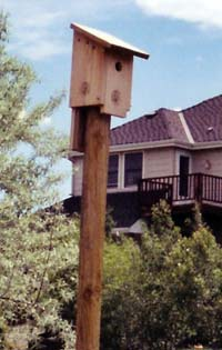 Nest boxes and feeders alike need to be out in the open so birds can react to potential danger.