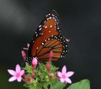 A butterfly friendly garden will attract a multitude of color to your yard.