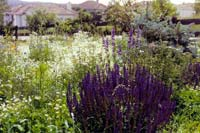 A backyard wildflower meadow will attract many birds and butterflies.