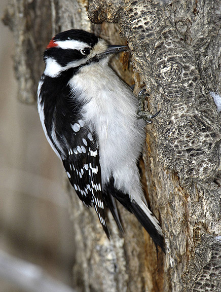 Blog Archives - Page 4 of 8 - Front Range Birding Company