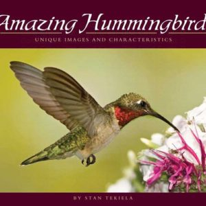 Amazing Hummingbirds – Unique Images and Characteristics