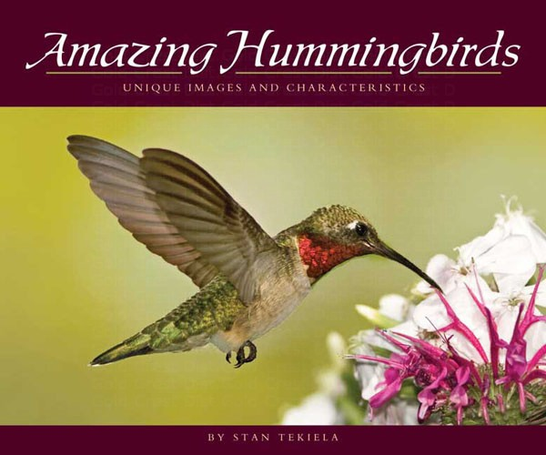Amazing Hummingbirds – Unique Images and Characteristics