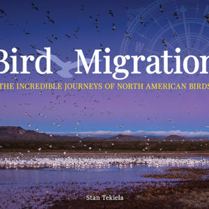 Bird Migration – The Incredible Journeys of North American Birds