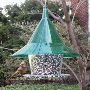 Mandarin Green Sky Café Feeder with seed tray