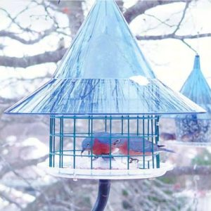 Mandarin Sky Cafe Bluebird Feeder