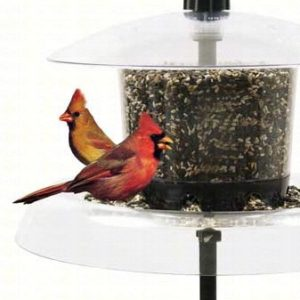 Jagunda Bird Feeder with Auger Pole