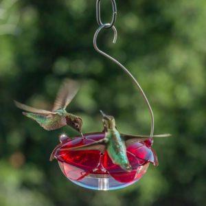 Ruby Sipper 5 oz clear Hanging Feeder
