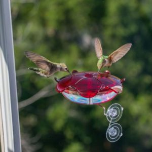 Ruby Sipper clear Window-mount Hummingbird Feeders