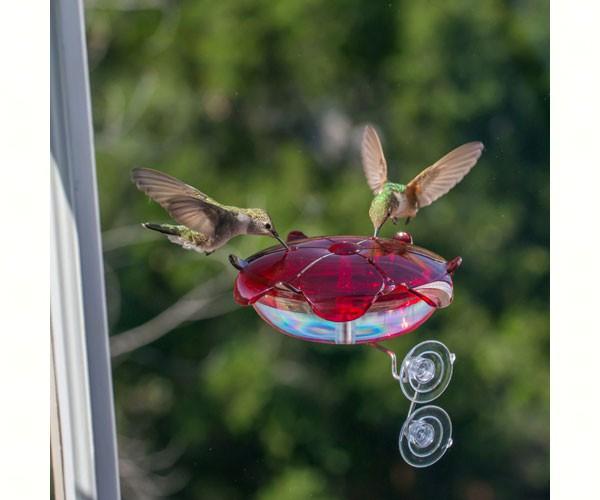 Ruby Sipper clear Window-mount Hummingbird Feeders