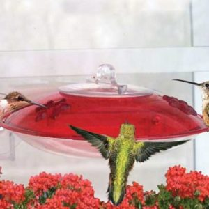 Window Hummer Feeder