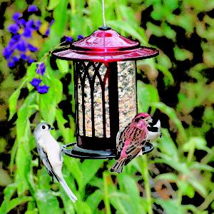 Garden Arch Hopper Feeder