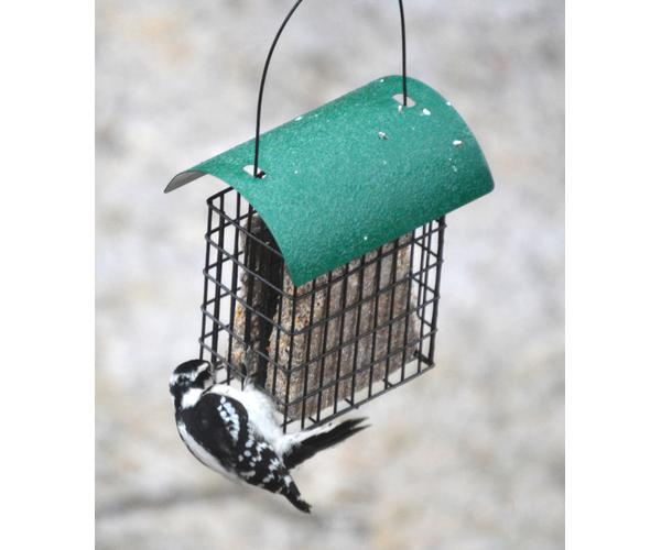 Deluxe Double Suet Basket with Green Roof