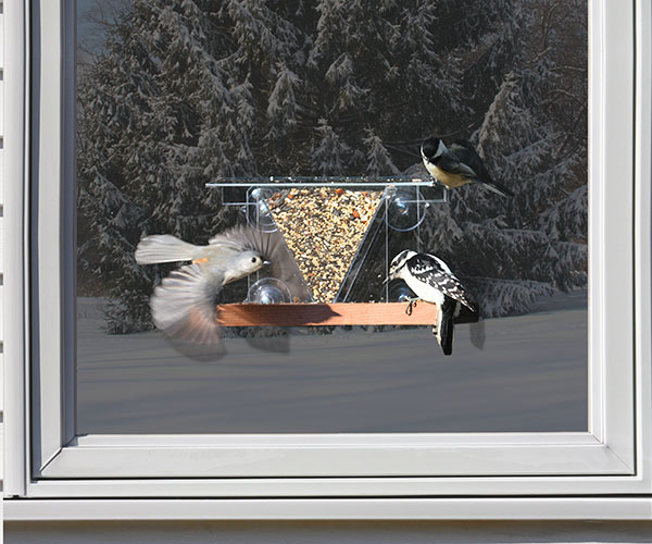 Window Feeder 3