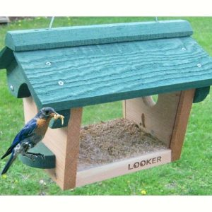 Cedar Bluebird Feeder with Green Top