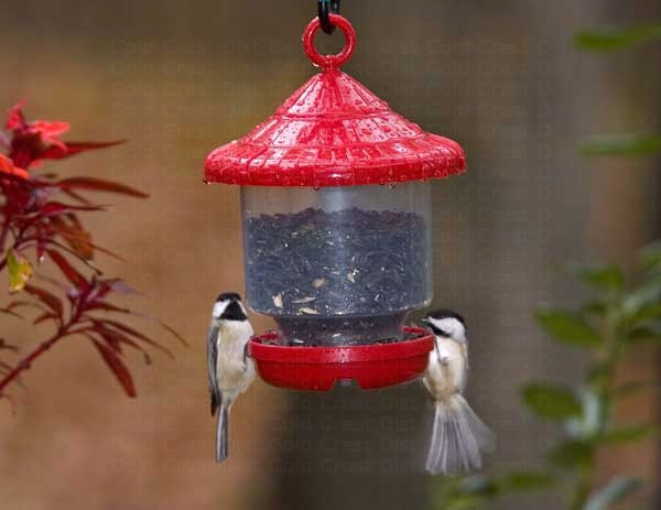 Clingers Only Red Feeder