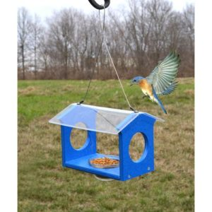 Bluebird Canteen Feeder