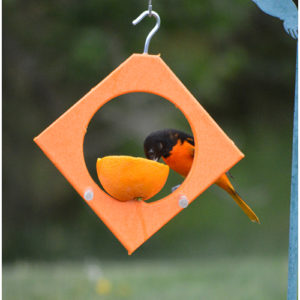 Diamond Oriole Spike Fruit Feeder