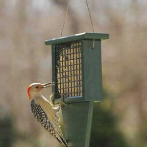 Recycled Suet Feeder with Tail Prop - Hunter Green