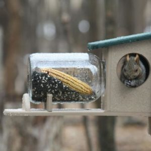 Recycled Squirrel Jar Feeder