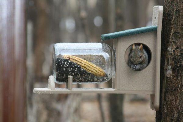 Recycled Squirrel Jar Feeder