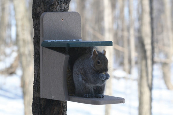 Recycled Squirrel Munch Feeder